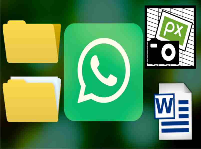 WhatsApp multimedia files to download
